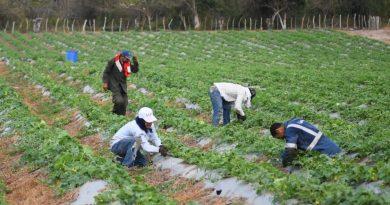 Más de 2 mil campesinos recibirán kits de siembra para reactivar el campo atlanticense