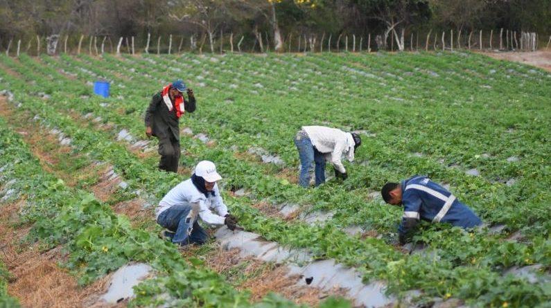 Kits de siembra para reactivar la economía en el Atlántico