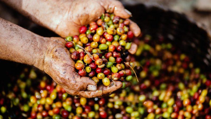 Región Caribe promueve feria de negocios verdes